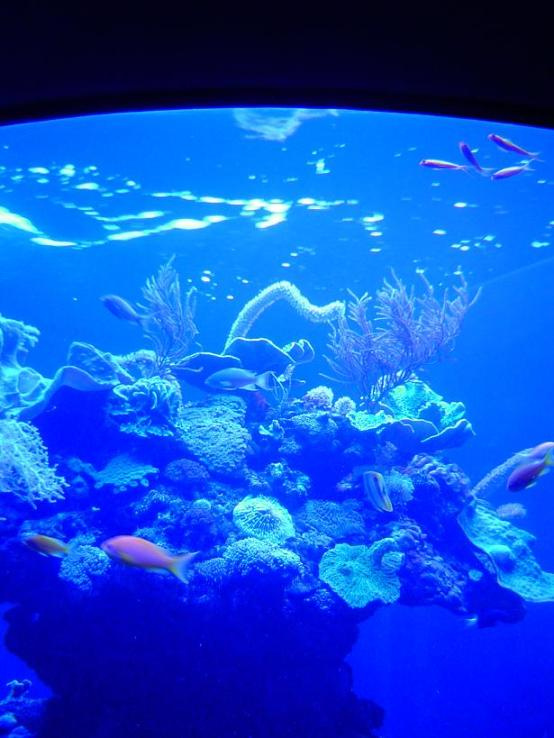 Aquario.vida