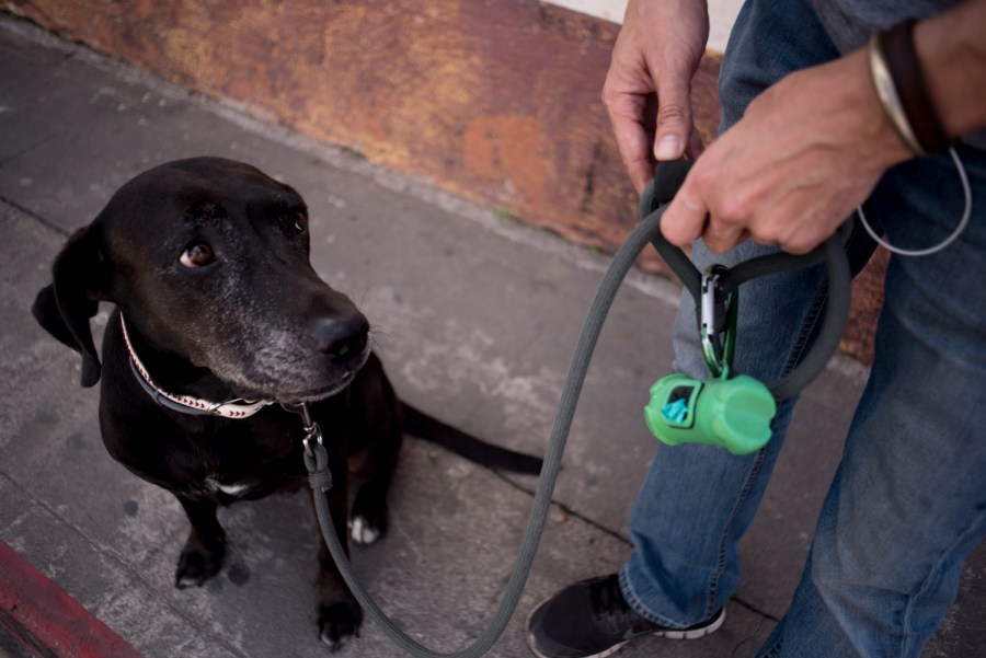 A local walks his dog in the streets of Antigua Guatemala. Photo: Santiago Billy/Comvite