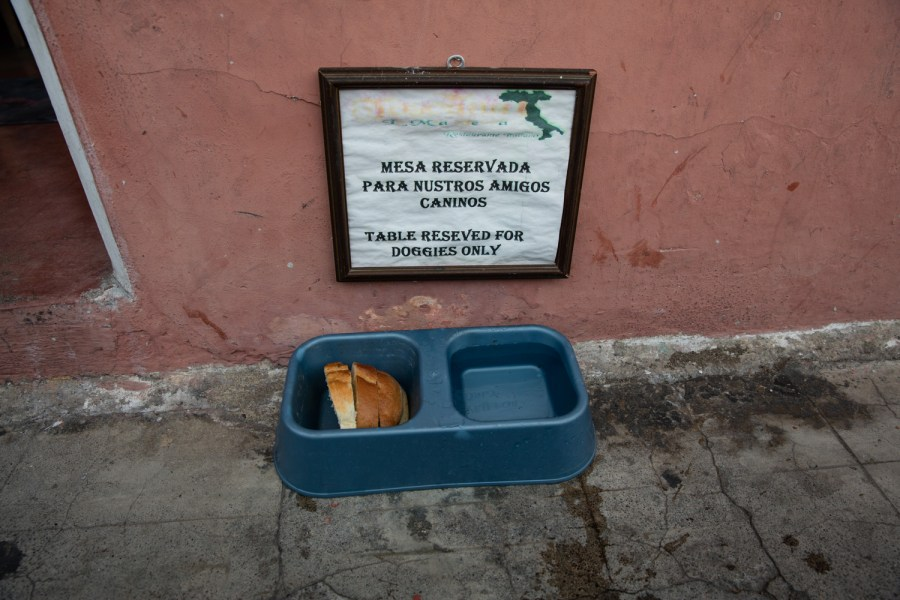 A local restaurant leaves food for street dogs in La Antigua Guatemala. Photo: Hyungsup Kim/Comvite