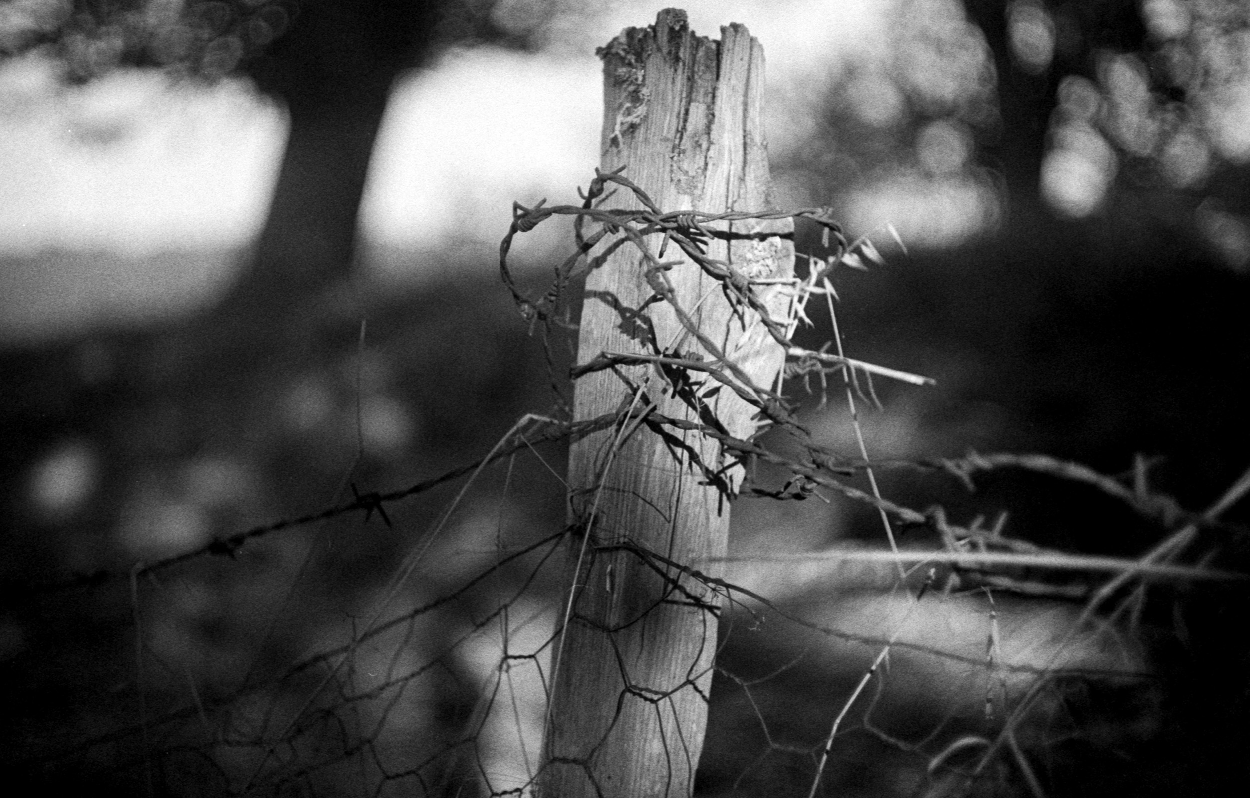 Black and white photographh of a fence post wrapped in barbed wire
