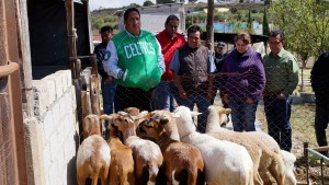 Entrega-Daniel-Cuevas-Ovinos-al-sector-productivo-de-Adequez