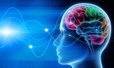 Bild eines Kopfes mit Gehirn