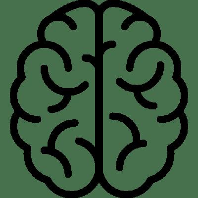Gehirnfunktion