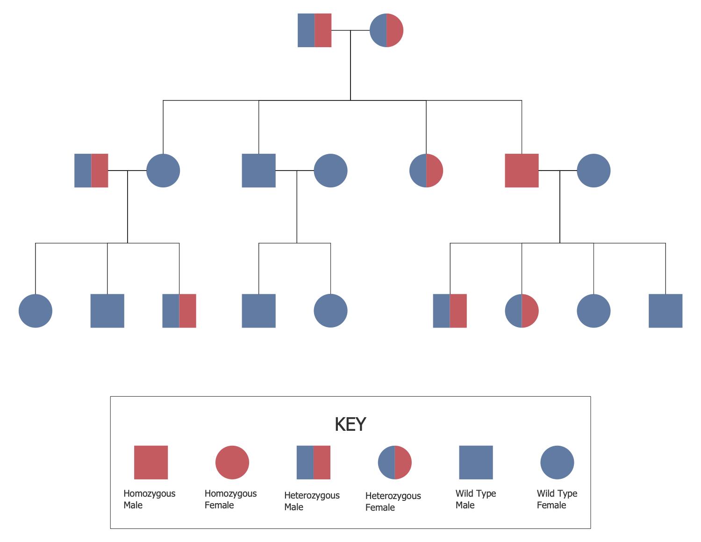 Family Tree Solution