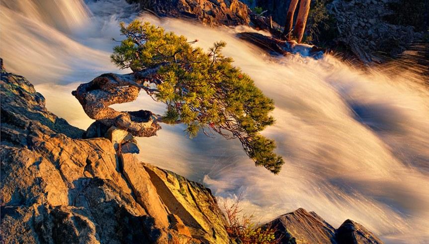 wild-bonsai-at-sunrise