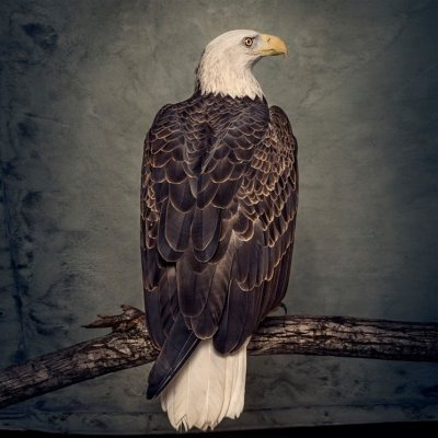 The front cover of Clutch's album