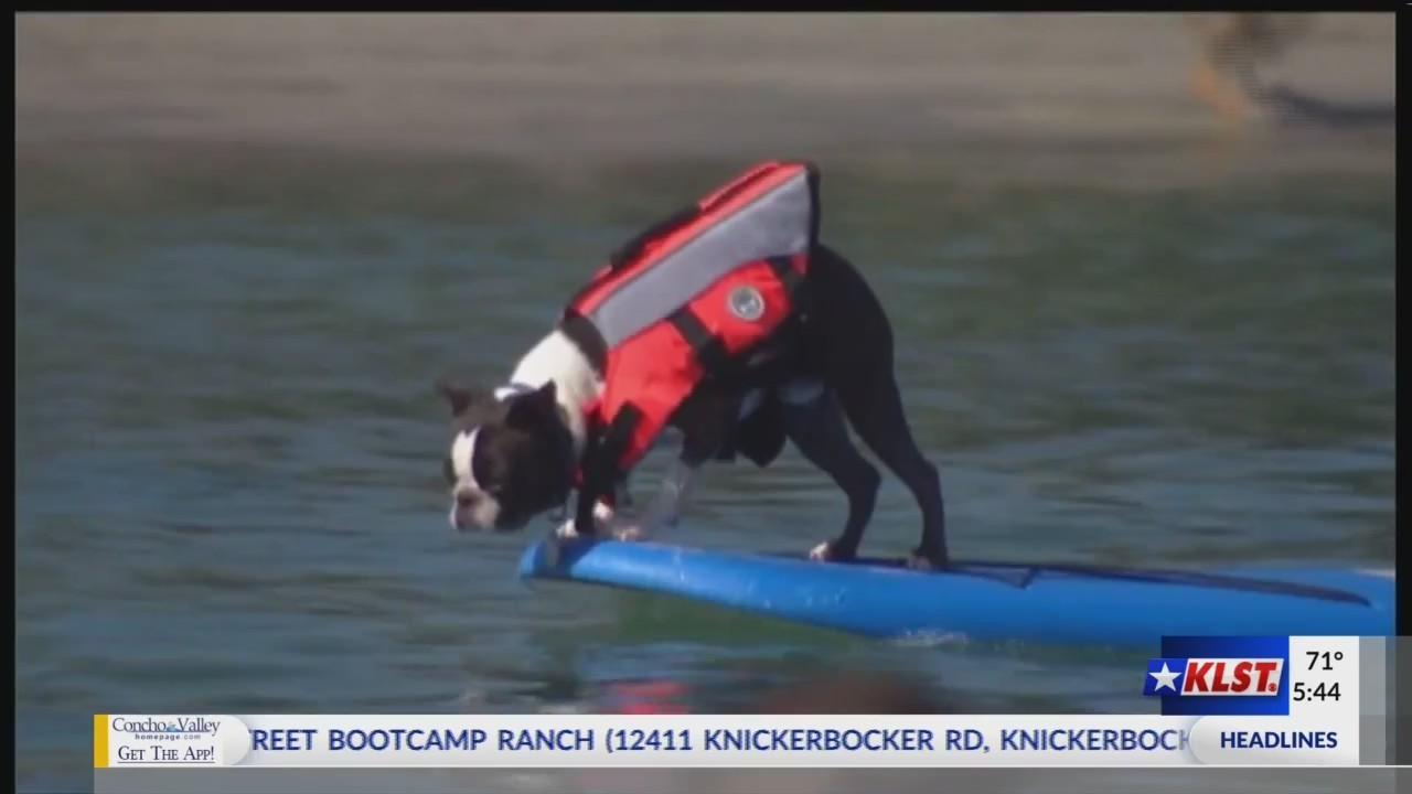 Paddleboarding_Pups__July_9__2018__0_20180709151140