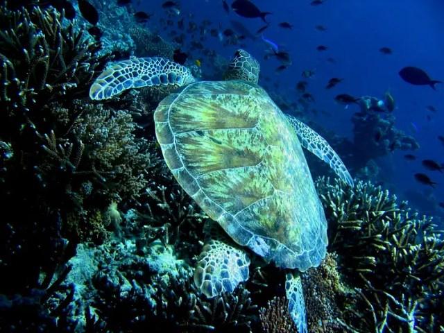 stockvault-malaysian-turtle101125