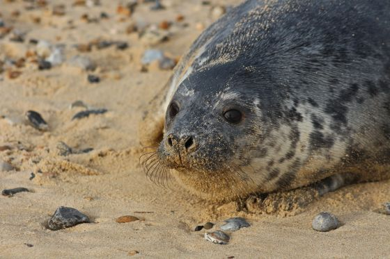 England's largest seal population in decline