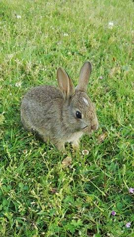 Some bunny that I used to know