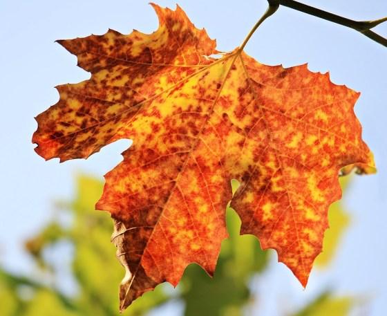 The fool of autumn
