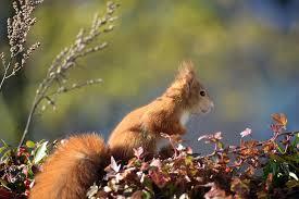 Squirrels help stroke patients