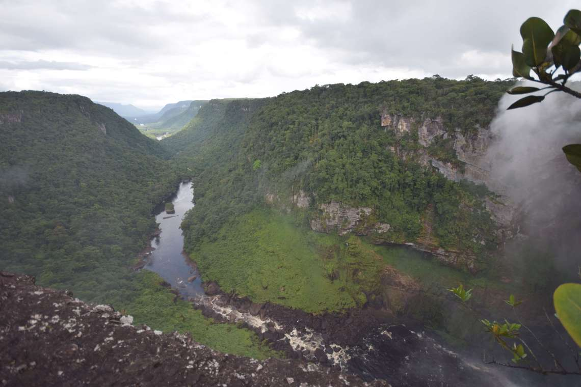 Image result for Kaieteur Falls Flora and Fauna