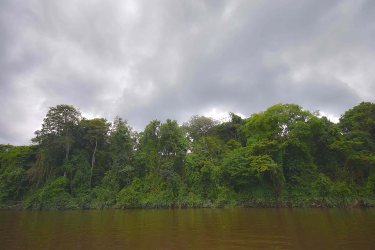 The Massive Green: A Primer on Travel to the Suriname Interior