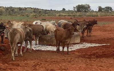 Cattle Trough Hard Stand at Alice Springs NT – 0158