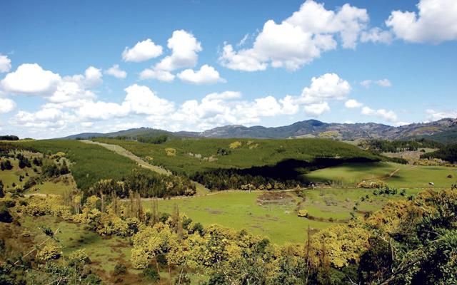 Blick auf die Landschaft bei Collipulli: Hier in der Provinz Malleco will die deutsche Firma wpd einen Windpark errichten.