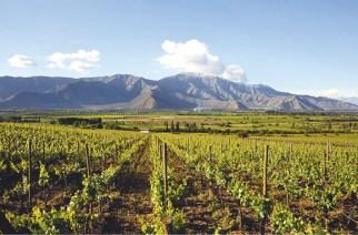 Weinanbau im chilenischen Aconcagua-Tal