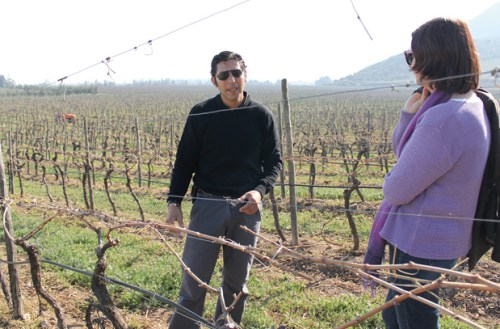 Miguel Besoain erklärt den Einfluss des Bodens auf den Geschmack des Weines.