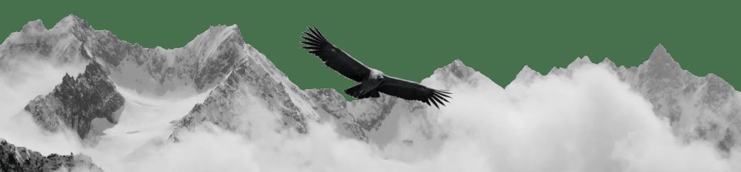 Condor Wealth Solution