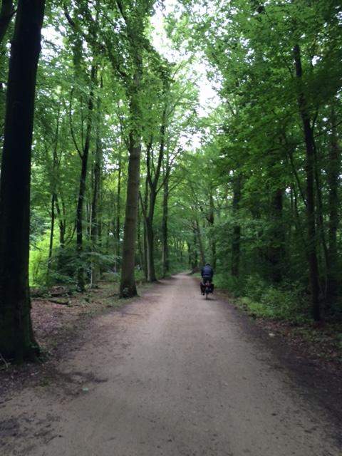 Bersepeda di hutan saat musim panas