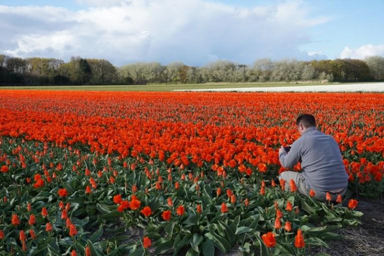 Menikmati tulip melalui lensa kamera