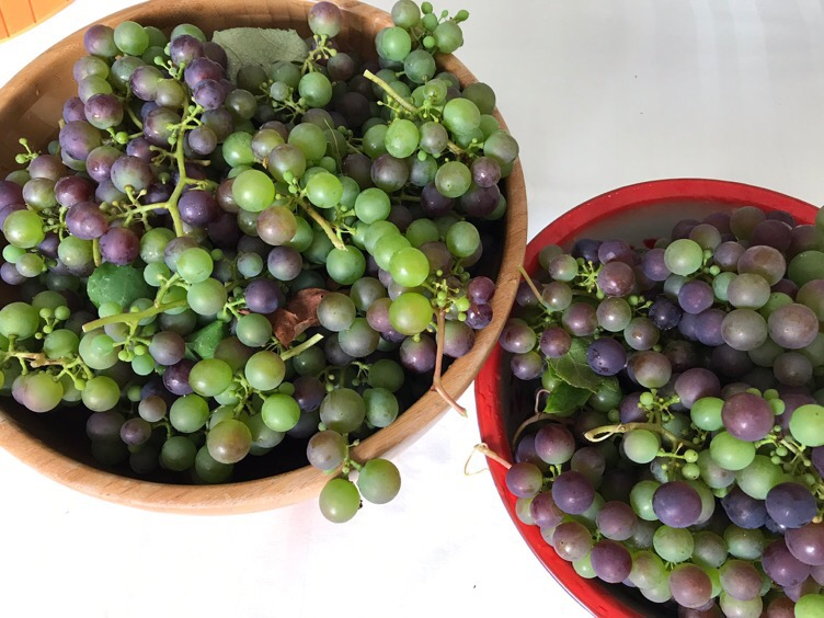 Panen Anggur Pertama sekitar 5kg an