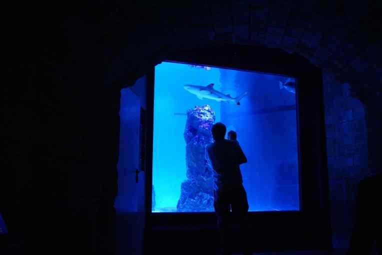 Pula Aquarium - Kroasia