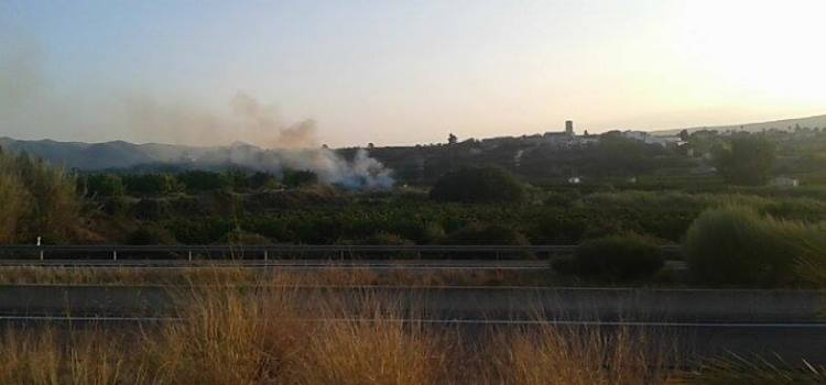 S'incendia un canyar a Aiacor.