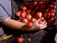 El colapso que sufre el mercado de la fruta de hueso pone en jaque la rentabilidad de toda la campaña