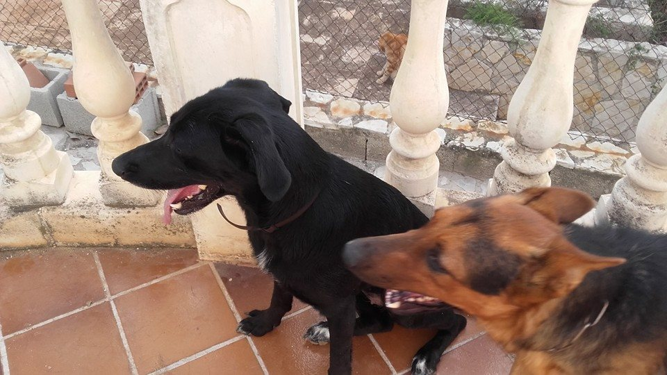 Es busquen dos gossos perduts des del dia 21 en Canals