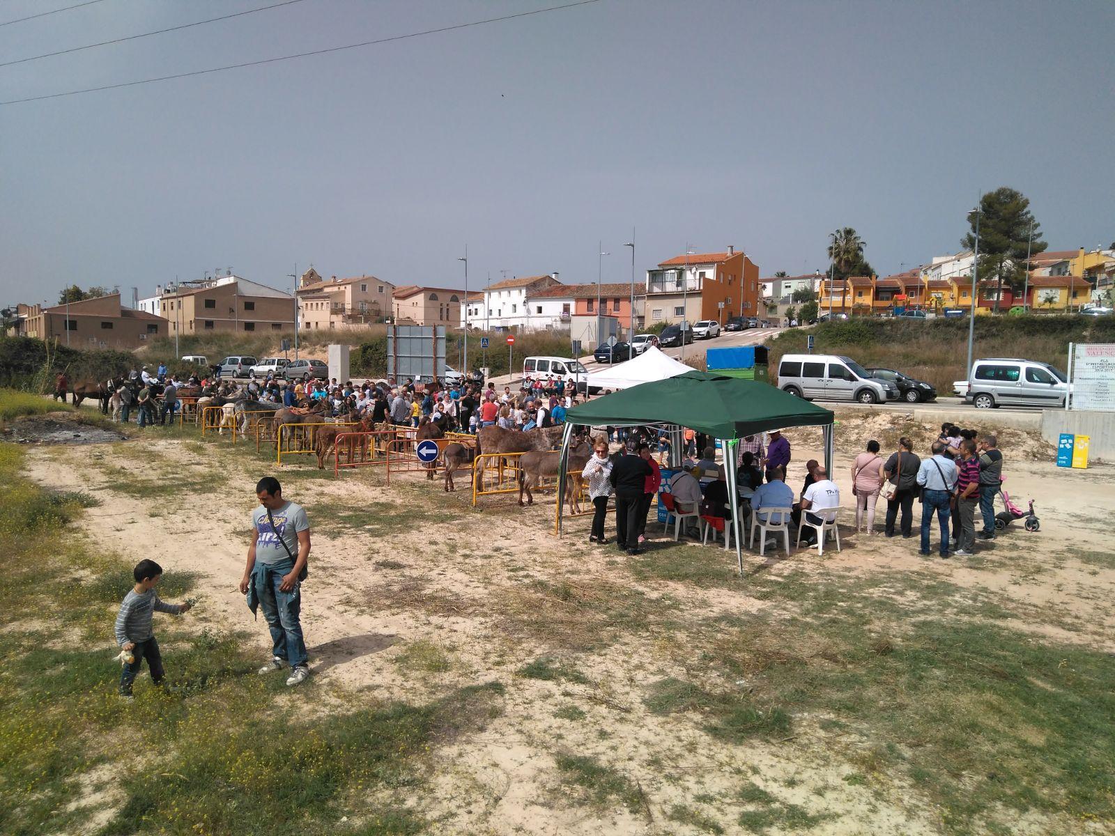 Els festers de Cerdà organitzen la «cagá de la burra»