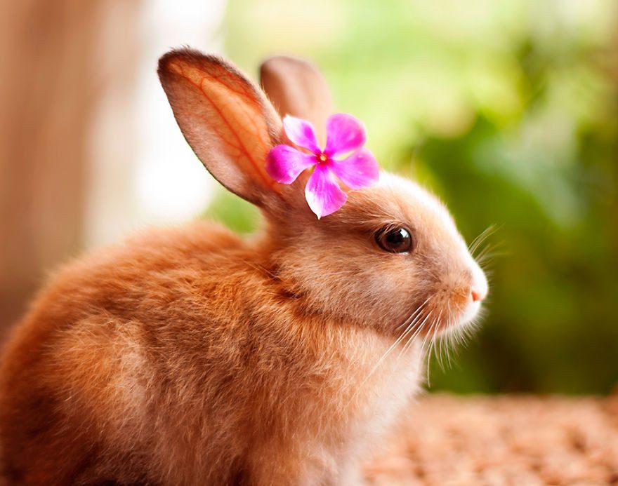 Resultado de imagem para conejo