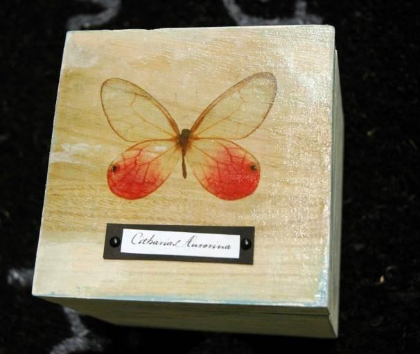 butterfly_01w
