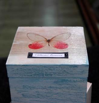 butterfly_04w