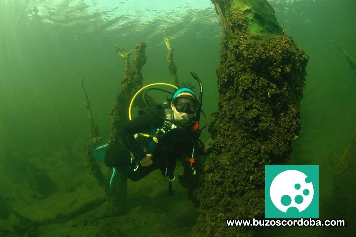 Viví la experiencia del buceo en Córdoba