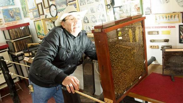El hogar de las abejas en el Pueblito