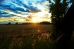 sunset-over-cornfield_21285287 FREEPIK dot COM