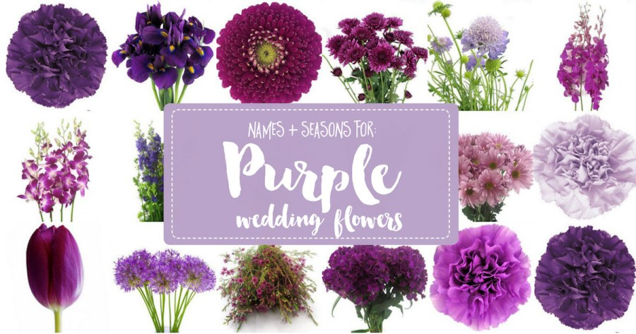 Complete Guide to Purple Wedding Flowers  Purple Flower Names   Pics Purple Wedding Flowers Names and Seasons