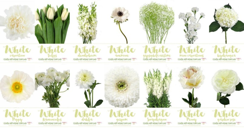 White flowers images with names djiwallpaper white wedding flowers guide types of names pics mightylinksfo