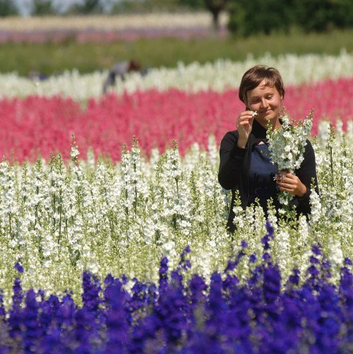 confetti flower field mix picking delphiniums
