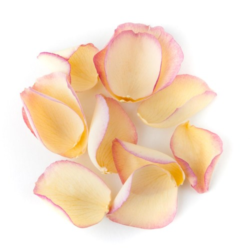 Pink and Cream Large Natural Rose Petal