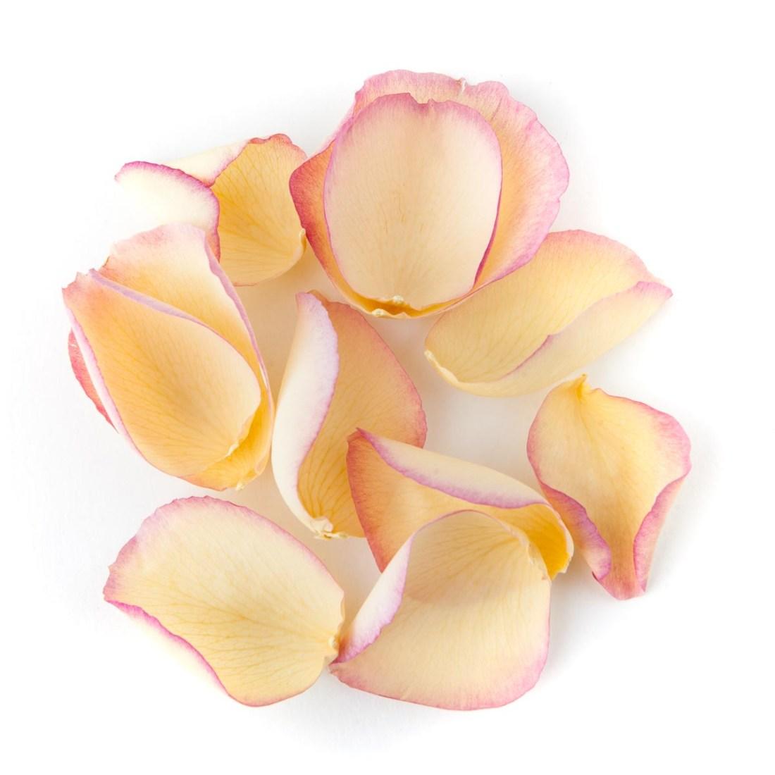 Pink and Cream Large Natural Rose Petal