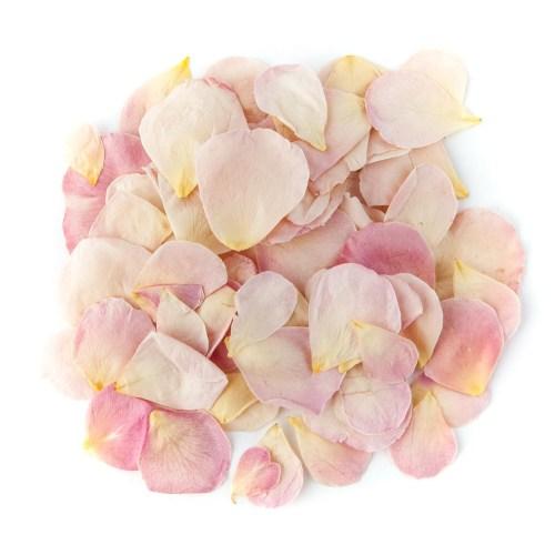 Blushing Pink Rose Petals
