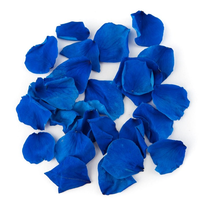 Blue Coloured Rose Petal