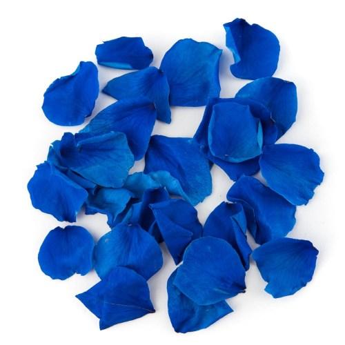 Blue Coloured Rose Petal