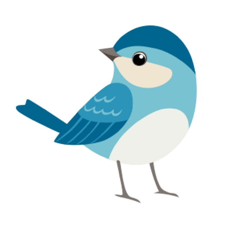 confetti blue bird