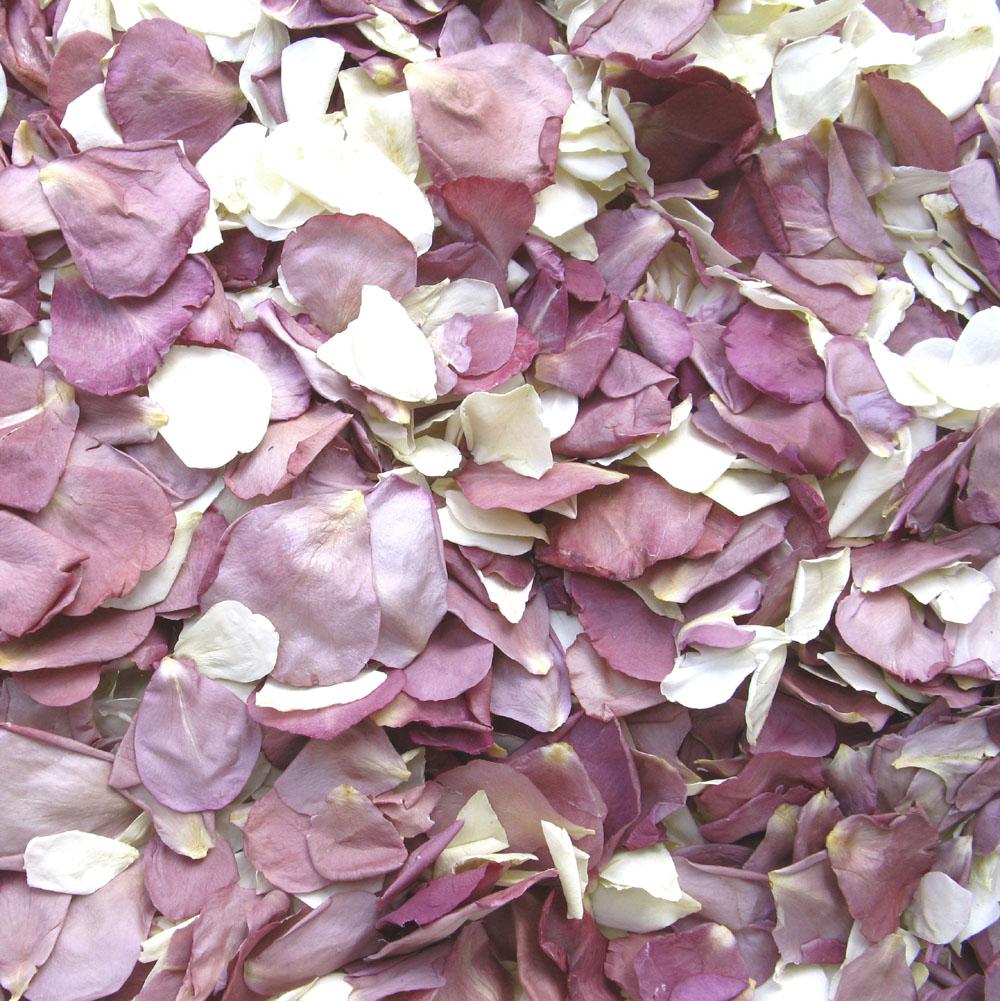 cream lilac rose petals confetti petals