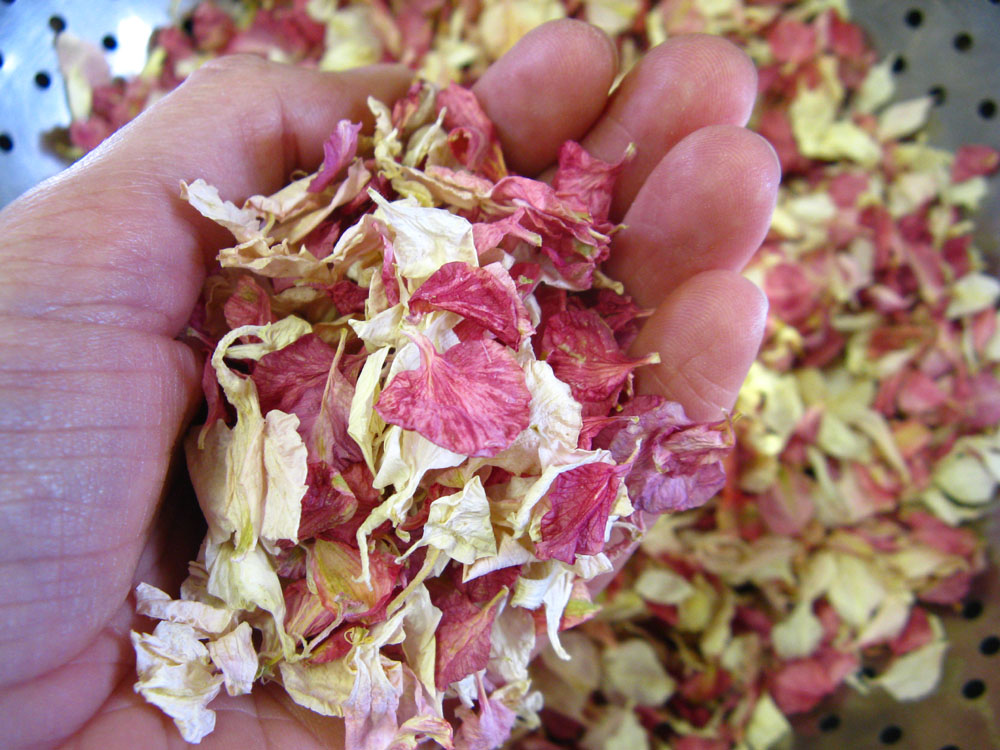 Biodegradable Confetti - Raspberry Pink and Ivory Delphinium Petals