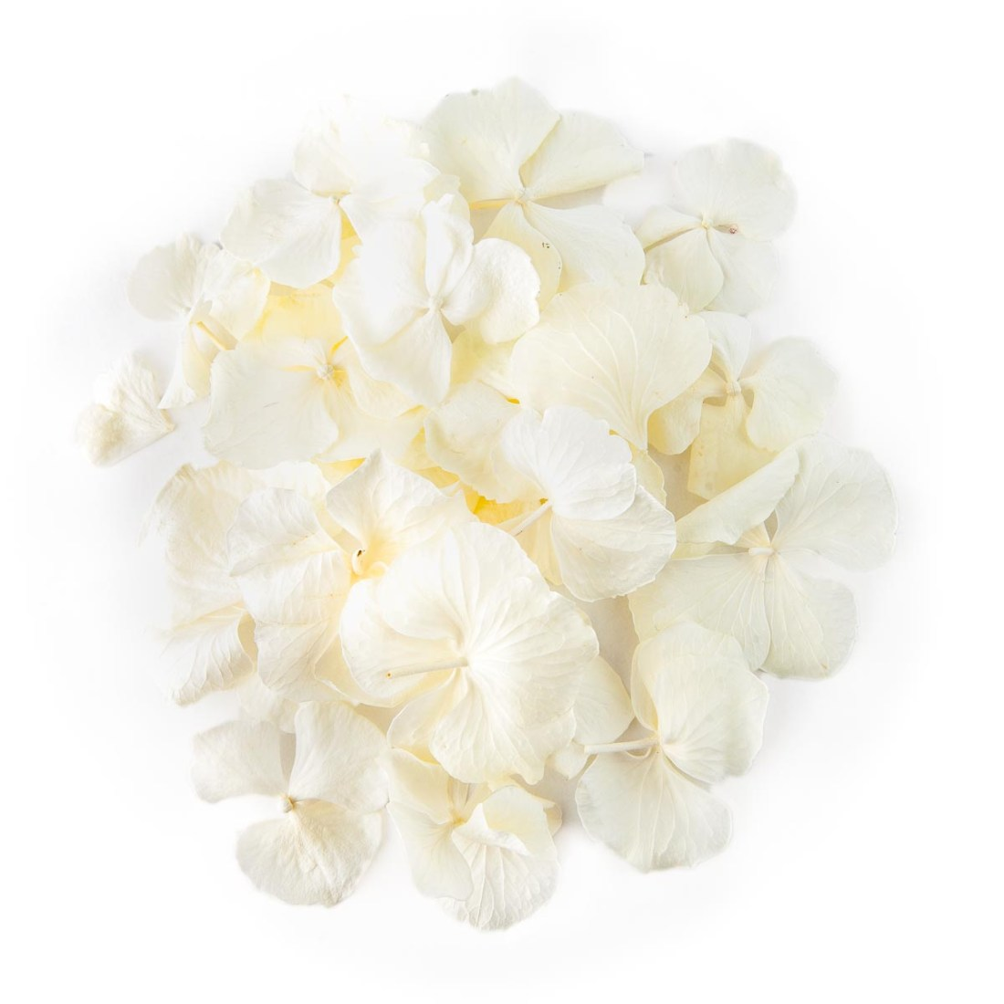 Flower petals - wedding aisles and petal pathways: White Hydrangea Petals