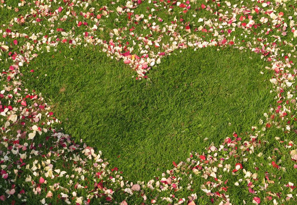 Flower petals - wedding aisles and petal pathways: rose petal heart